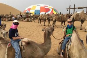 foto mongolia camellos